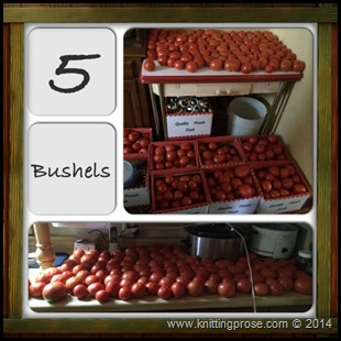 canning tomatoes